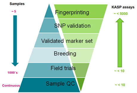 Marker-assisted selection (MAS) in plant and animal breeding (MAB) graph