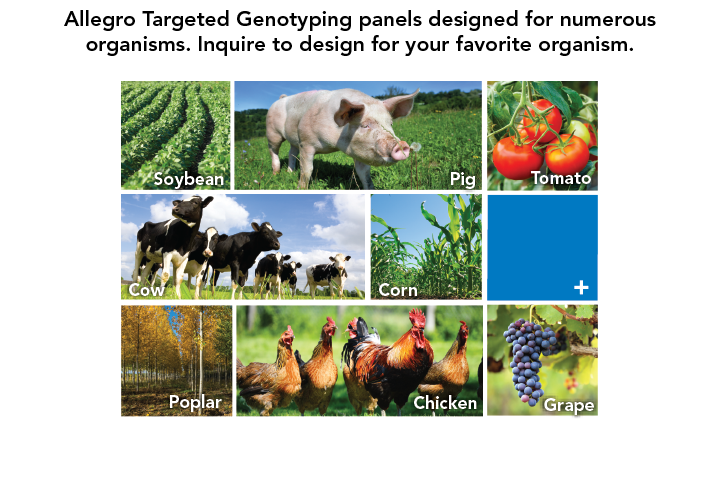 allegro targeted genotyping sequencing kits organism