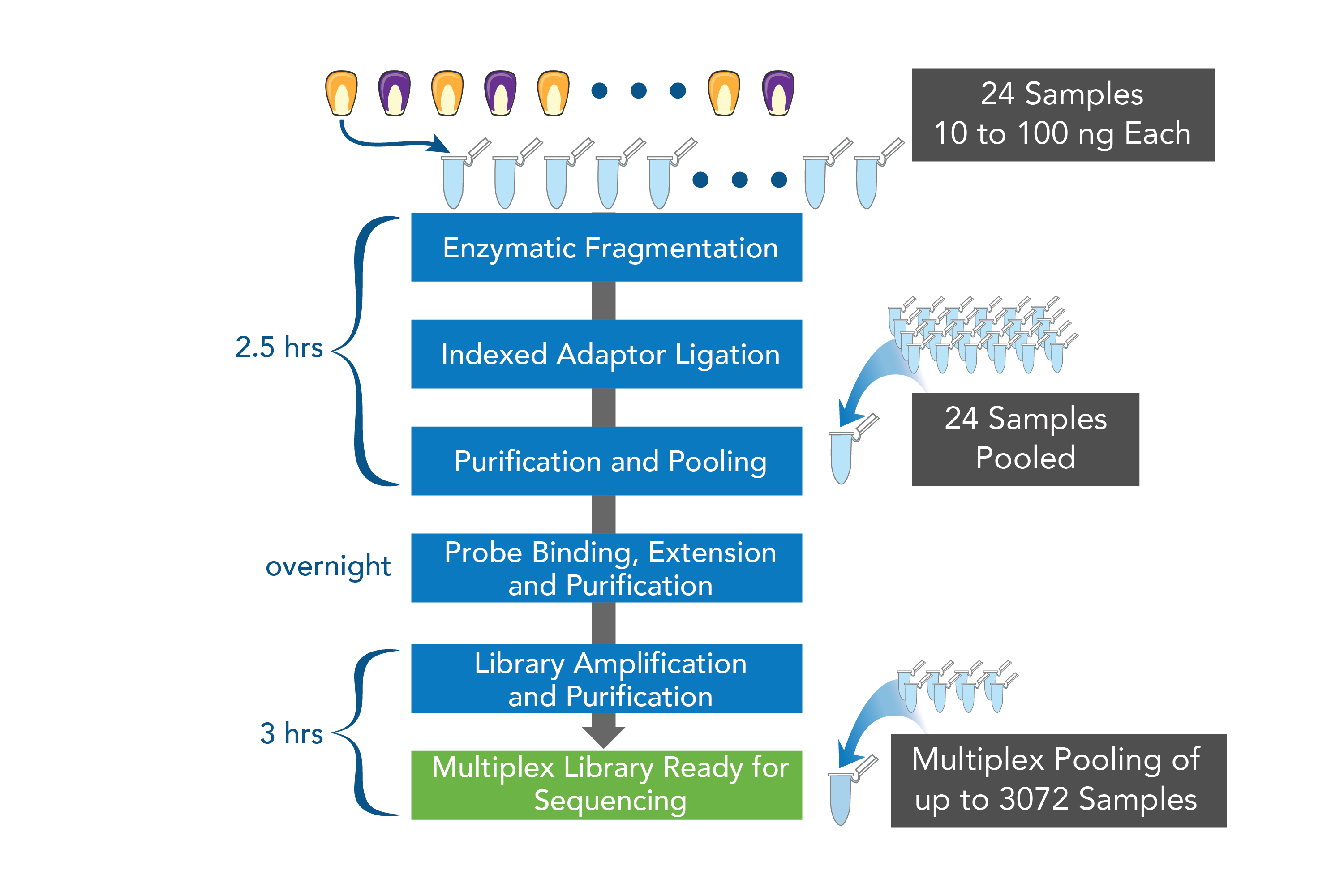 allegro targeted genotyping sequencing kits workflow