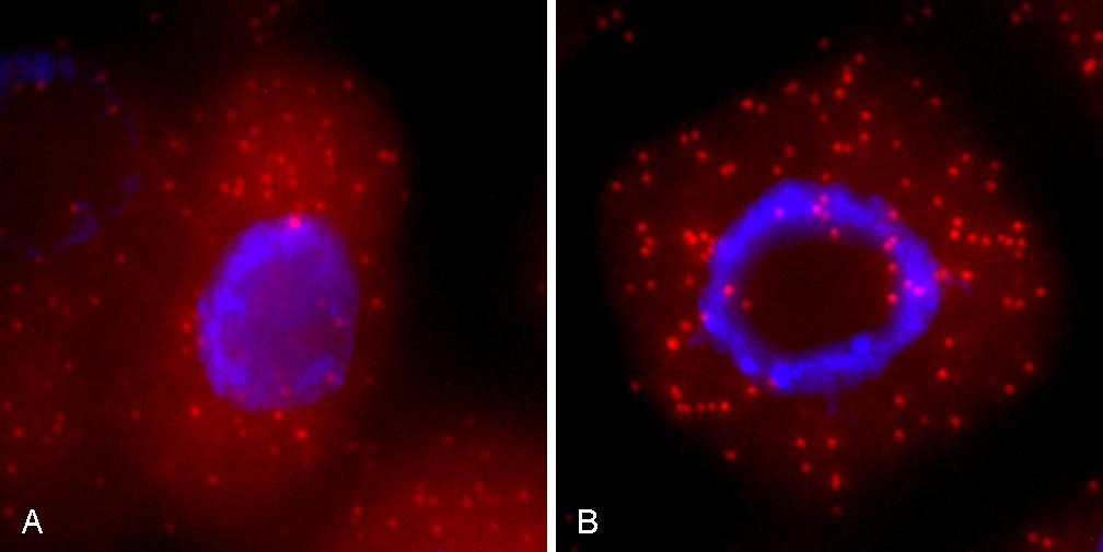 buffer comparison arabidopsis thaliana tissue
