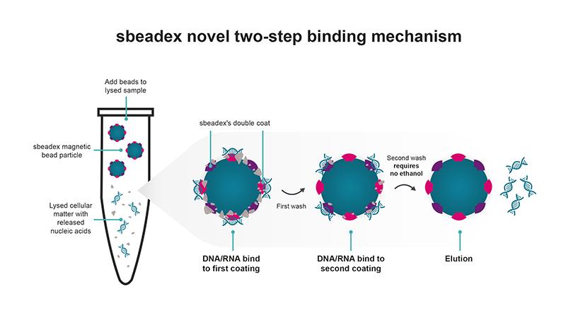 sbeadex binding mechanism